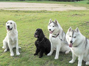 20080525_0220_kenyudai.jpg