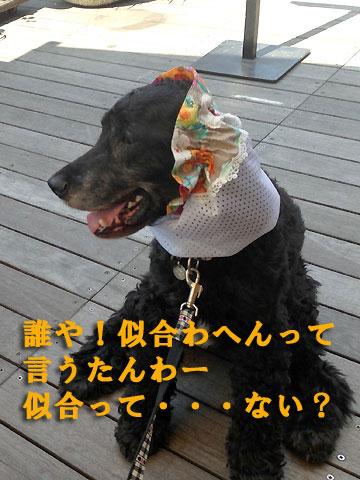 iphone5-cs06.jpg